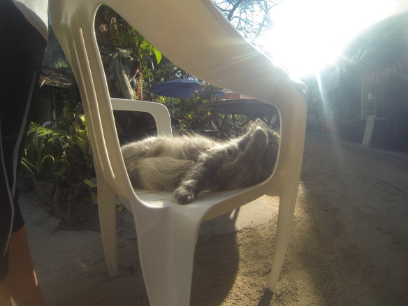 Lazy cats: Railay Beach.